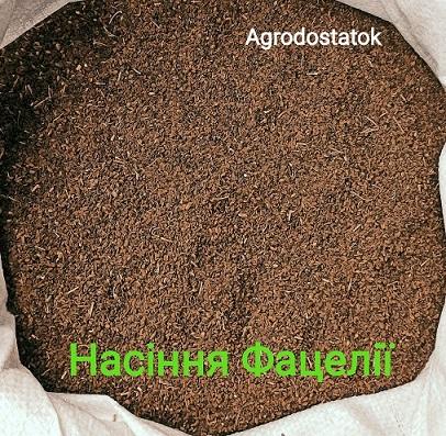 фото насіння